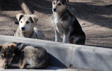 Χρηματοδότηση των δήμων για καταφύγια αδέσποτων ζώων συντροφιάς