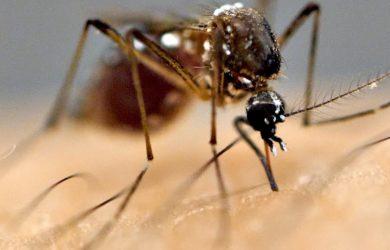 Ιός του Δυτικού Νείλου. Πληροφορίες και προφύλαξη από τα κουνούπια